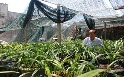 Vườn lan của ông Nguyễn Tuấn Phương. Ảnh: website Rừng Lan.