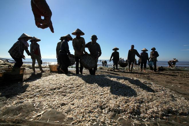 Có rất nhiểu đặc sản biển như cua, ghẹ, tôm (tôm he, tôm thuyền, tôm đanh, tôm rảo), cá khoai, mực... tuy không to nhưng tươi, ngon do người dân đánh bắt gần bờ, sáng đi, chiều về.