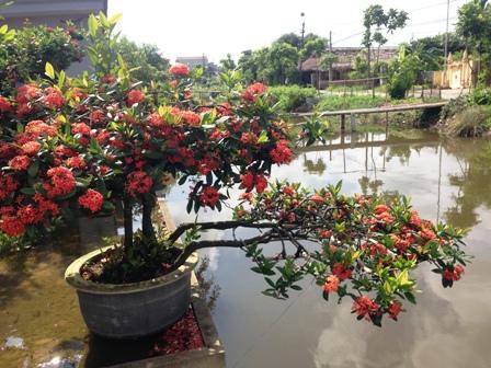 Một chậu hoa mẫu đơn soi bóng bên bờ sông.