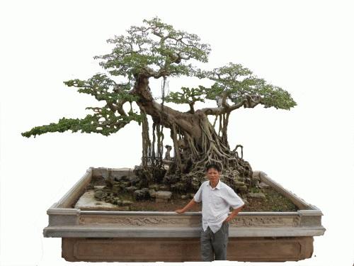 Thế cây độc đáo được nhiều người yêu thích. Ảnh HKT