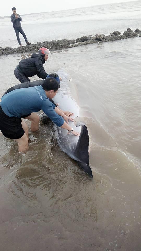 Người dân Nam Định chung tay cứu chú cá voi