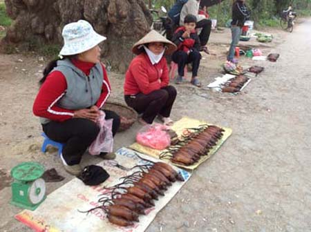 Vào dịp gần Tết Nguyên Đán này ở Vạn Lộc, thịt chuột đồng đang được người dân bán với giá trên dưới 70.000 đồng/kg, gần bằng giá tiền của 1kg thịt lợn. Ảnh: Mạnh Thắng