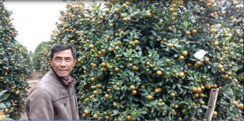 Ông Đoàn Huy Bé bên cây quất được bán có giá gần chục triệu. Ảnh Kim Thược