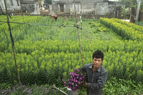 Làng trồng hoa Phù Long nằm ngay bên bờ sông Hồng và chỉ cách Thành phố Nam Định một lượt đò ngang. Người làng thường bận rộn vào những dịp lễ tết, 8 - 3 do nhu cầu mua hoa tăng cao cao.