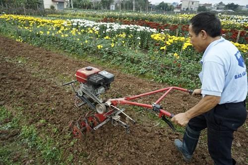 Nghề trồng hoa được coi như là nghề lâu đời của người dân nơi đây và cho thu nhập khá tốt quanh năm. Nnhiều hộ bắt đầu sắm máy cày để giảm bớt nặng nhọc. Trong ảnh là ông Nguyễn Minh Thành đang cày ruộng với chiếc máy cày mua 2 năm trước. Nhà ông có 8 sào đất trồng các loại hoa cúc.