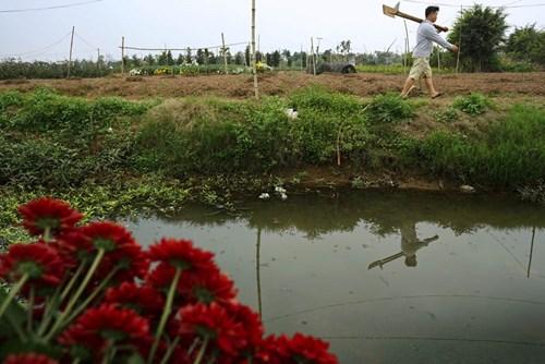 Trên 90% người Phù Long trồng hoa.