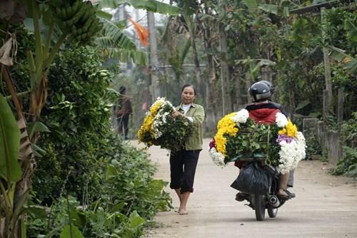 Những bó hoa đa màu sắc trên đường làng thôn Phù Long.