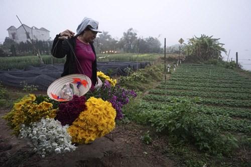 Hình ảnh các bà gánh hoa đi đò trong buổi sáng sớm không còn nhiều, người dân giờ có cầu mới nên đã chuyển từ vượt sông sang đường bộ để mang hoa vào Thành phố.