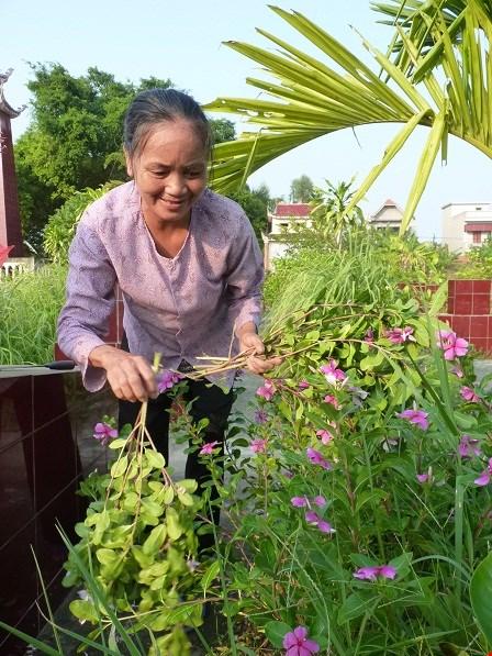 Bà Nguyễn Thị Hột ngắt hoa viếng mộ.