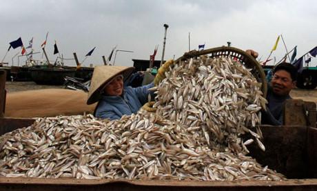 Tươi rói nụ cười ngư dân khi trúng đậm vụ cá.