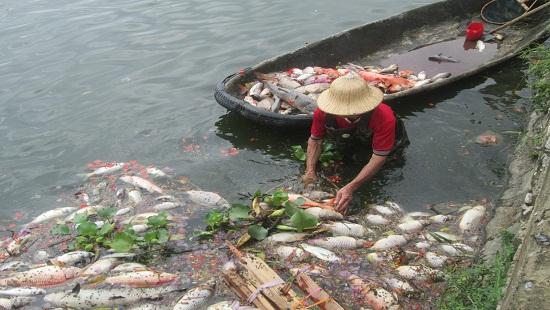 Cá chết hàng loạt nổi trắng một góc hồ Truyền Thống
