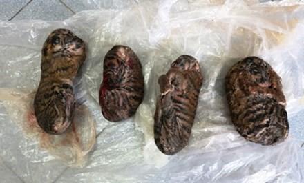 Bốn cá thể hổ con đông lạnh được bán với giá 8 triệu đồng .