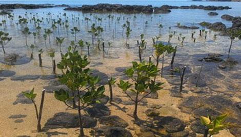 Tỉnh Nam Định đẩy mạnh công tác trồng rừng phòng hộ ven biển.