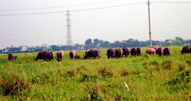 Hàng chục ha ruộng hai vụ lúa của xã Mỹ Trung, huyện Mỹ Lộc bỏ hoang hóa