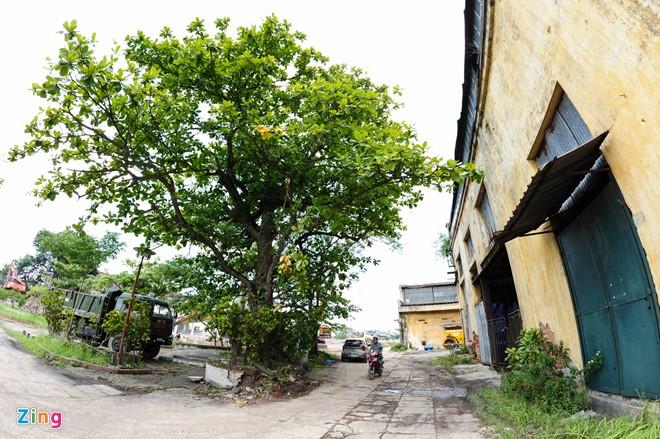 Thứ được giữ lại duy nhất ở khu vực này là cây bàng lịch sử, nơi treo lá cờ Đảng của Chi bộ đầu tiên ở thành phố Nam Định. Xung quanh cây bàng sẽ được xây dựng công viên 25/3.