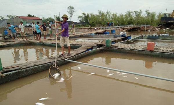 Nông dân ở xã Xuân Châu (Xuân Trường, Nam Định) xót xa vớt những con cá chết. Ảnh: V.T