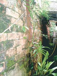Một đoạn chân tường thành còn lại của thành cổ Nam Định.