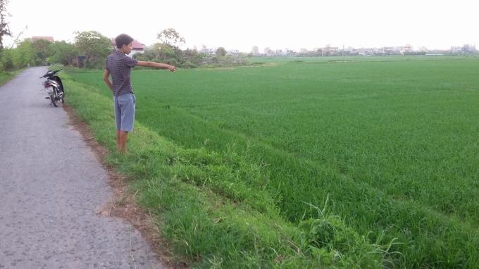 Còn đây là là ruộng lúa nơi phát hiện thi thể của Đỗ Xuân Trường hôm xảy ra án mạng cách vườn dua hồng một đoạn.