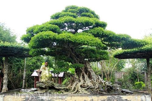 Một dáng cây được chăm sóc cẩn thân