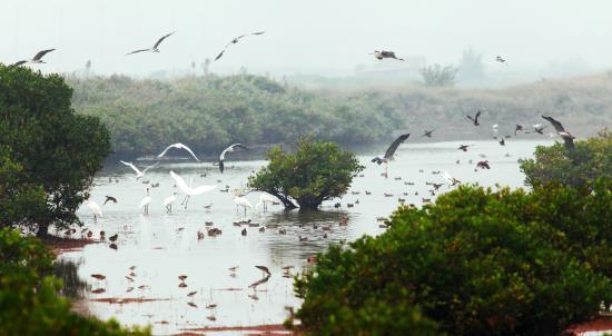 Khám phá vùng đất ngập mặn Xuân Thủy – Giao Thủy