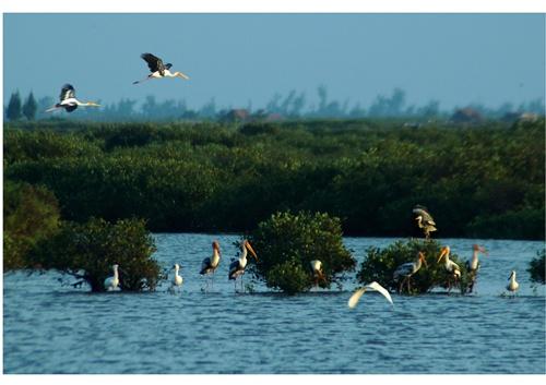 Hệ sinh thái đất ngập nước là nơi ngụ cư của nhiều loài động vật thủy sinh và chim nước