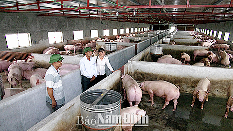 Mô hình chăn nuôi trang trại VAC của anh Nguyễn Văn Luật, xã Hải Đông (Hải Hậu) cho thu nhập cao.