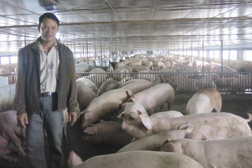 Với mô hình nuôi lợn gia công, mỗi năm anh Vũ Văn Khiêm lãi ròng 700 triệu đồng. Ảnh: V.D