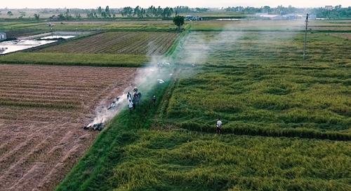 Nam Định có diện tích trồng lúa lớn, chất gạo ngon, sản lượng tăng dần nhưng đầu ra chưa ổn định. Ảnh: bizmedia.