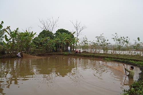 Hằng năm, bắt đầu từ ngày 29 tháng Chạp, người dân ở xã Phương Định, huyện Trực Ninh, tỉnh Nam Định lại rậm rịch chuẩn bị món cá nướng bày trong mâm cơm ngày Tết.