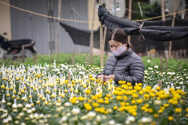 Ngoài quất và đào, xã Nam Phong, Nam Trực còn nổi tiếng là làng hoa lớn trong vùng. Những ngày giáp Tết là những vụ hoa lớn nhất trong năm vì vậy người nông dân trồng hoa thường làm việc ngày đêm không nghỉ.