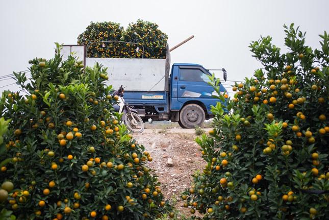 Phong tục chơi cây đào, quất cảnh trong nhà để cầu bình an trong những ngày Tết cổ truyền của Việt Nam. Từ vùng đất Thành Nam, những cây đào quất tỏa đi khắp mọi miền để rồi mang lại cái Tết ấm no và an bình cho chính những người nông dân ở đó.