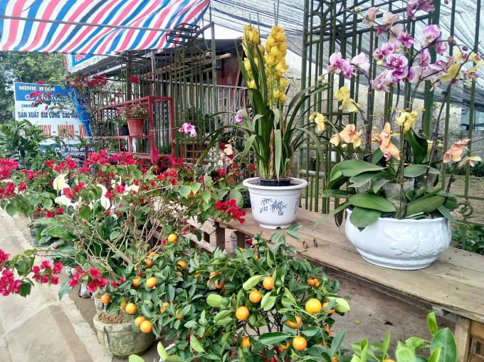 Nhiều loại hoa khoe sắc trong các sạp hàng cây tết.