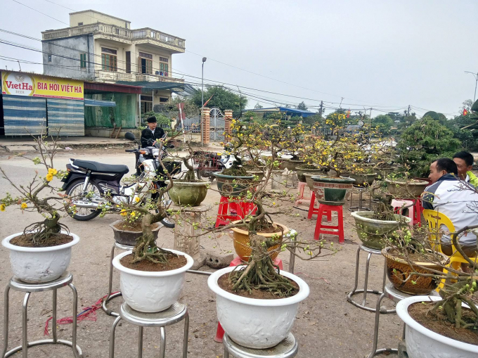 Một điểm bán cây hoa mai vàng.