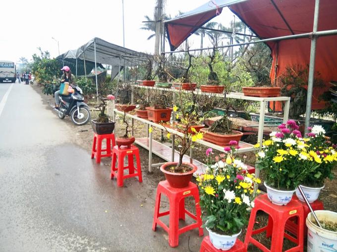 Nhiều loại hoa, cây cảnh đua nhau khoe sắc hai bên đường.