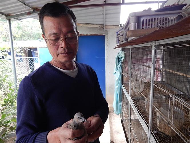 Con chim gáy 4 tháng tuổi được ông Trung nuôi riêng .