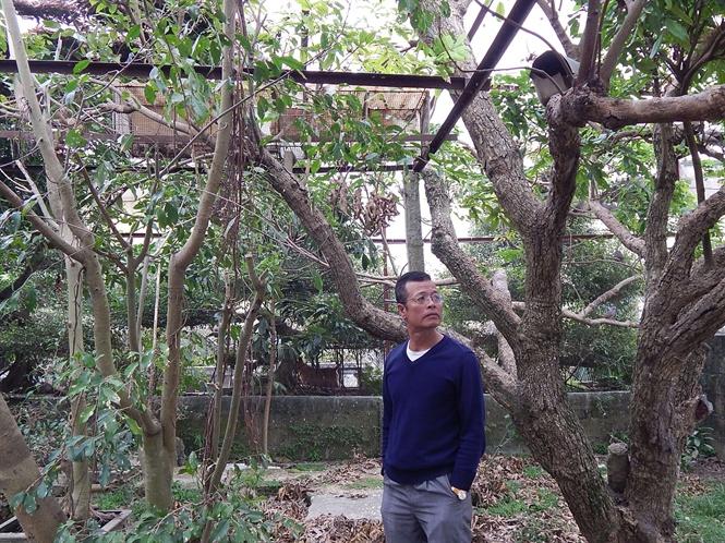 Ông Trung tản bộ trong vườn chim cu gáy .