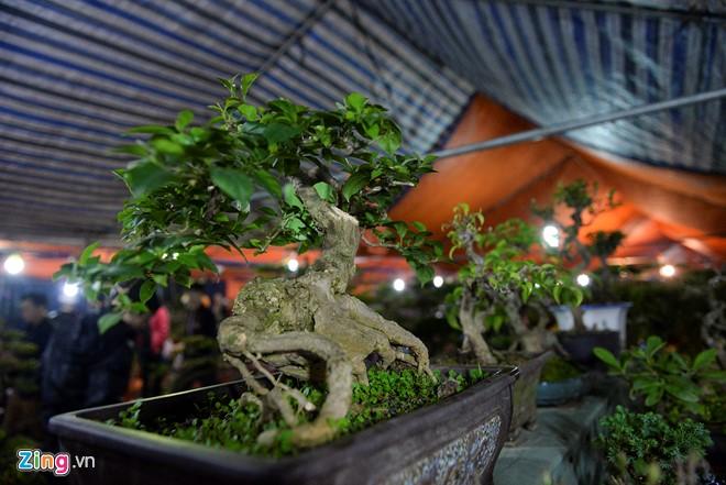 """Cây hoa giấy bonsai được rao bán với giá 2,5 triệu đồng. """"Loại cây này chỉ cửa hàng chúng tôi mới có"""", anh Mạnh, một người bán hàng lâu lăm tại chợ Viềng khẳng định."""