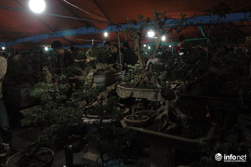 Rất nhiều cây cảnh có trị giá từ 1- 10 triệu đồng được bày bán ở chợ Viềng.