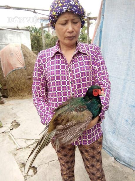 Nữ nông dân Vũ Thị Lành thành công với mô hình nuôi chim trĩ (chim trĩ xanh, chim trĩ đỏ) quý hiếm (Ảnh: TD)