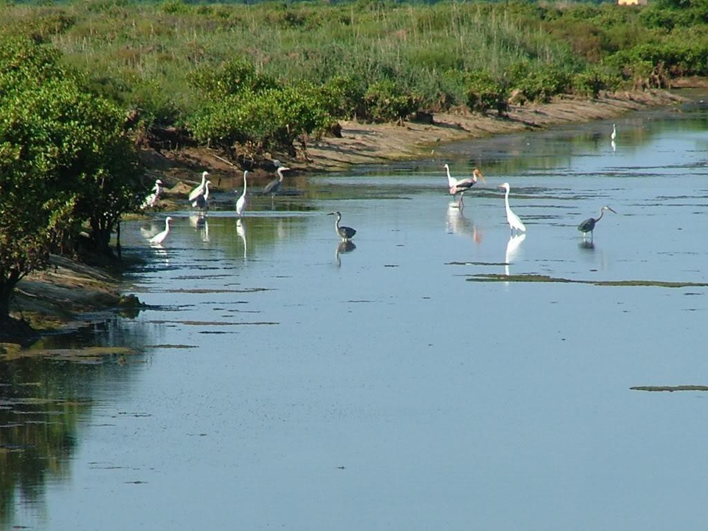 Khu dự trữ thiên nhiên vườn quốc gia Xuân Thủy - Ảnh: vns360