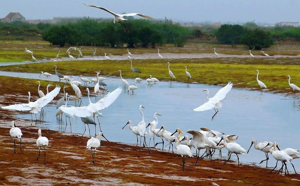 """Vườn quốc gia Xuân Thủy là """"nhà ga"""" của chim chóc - Ảnh: John_vn"""