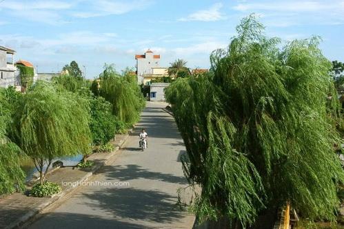 Hàng liễu xanh mát mắt bao bọc quanh làng