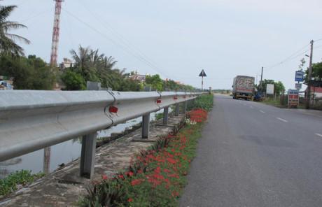 Hoa được trồng ven một con đường tỉnh lộ đi qua xã Hải Hà
