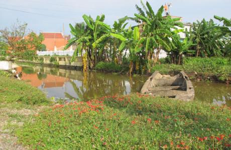 Hoa mười giờ duyên dáng khoe sắc ven sông