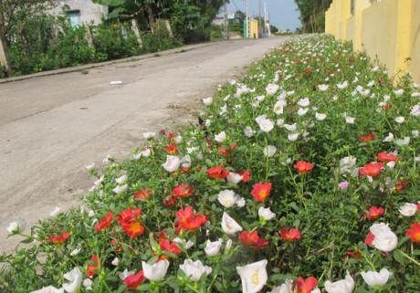 Con đường hoa được đông đảo các gia đình hưởng ứng