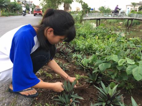 Em Phạm Tú Anh, học sinh lớp 11, trồng hoa mười giờ ven đường xã Hải Sơn trước cửa nhà mình