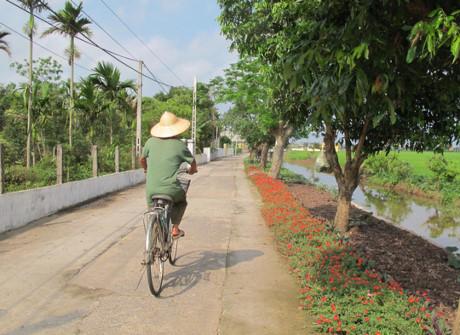 Hoa chạy dài dọc ven đường làng