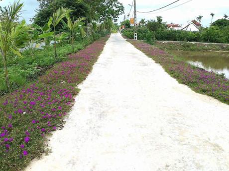 Ngỡ ngàng trước vẻ đẹp mới lạ của những con đường làng quen thuộc
