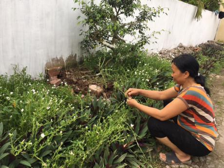 Bà Lê Thị Mai, xã Hải Toàn, chăm sóc luống hoa mười giờ ven con ngõ vào nhà