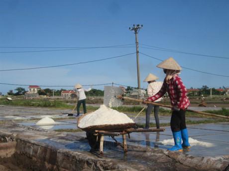 Hải Hậu: Bèo bọt hạt muối không nuôi nổi diêm dân